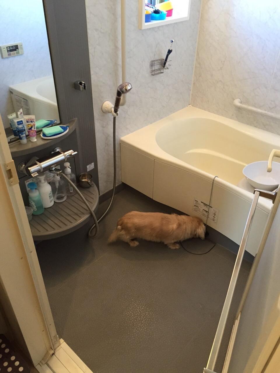12/25 浴室クリーニング@金沢区六浦東