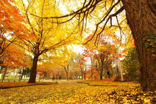 【おそうじマスターズ店長コラム】寒くなる前に!秋に大掃除する方が年末にまとめてするよりも効率的な理由とは