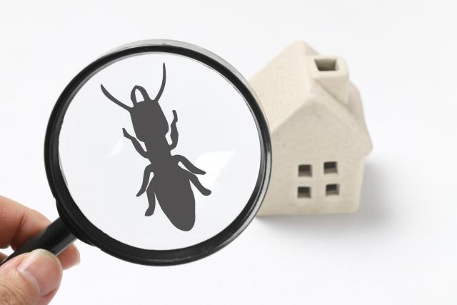 【おそうじマスターズコラム】いつのまに?室内に入りこむアリ・クモ・ムカデの原因とお掃除のポイント