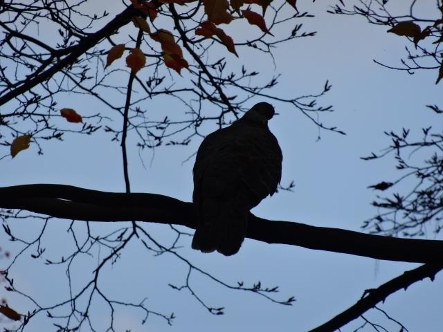 【おそうじマスターズコラム】ベランダ、車の鳥のフンには要注意!鳩やカラスの鳥よけとフンの対策