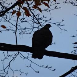 ベランダ、車の鳥のフンには要注意!鳩やカラスの鳥よけとフンの対策