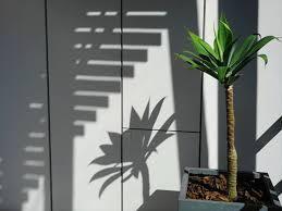 植木の植え替え
